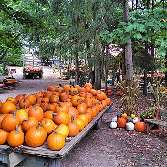 Fall-Harvest-Farm-Wellesley-Township-square